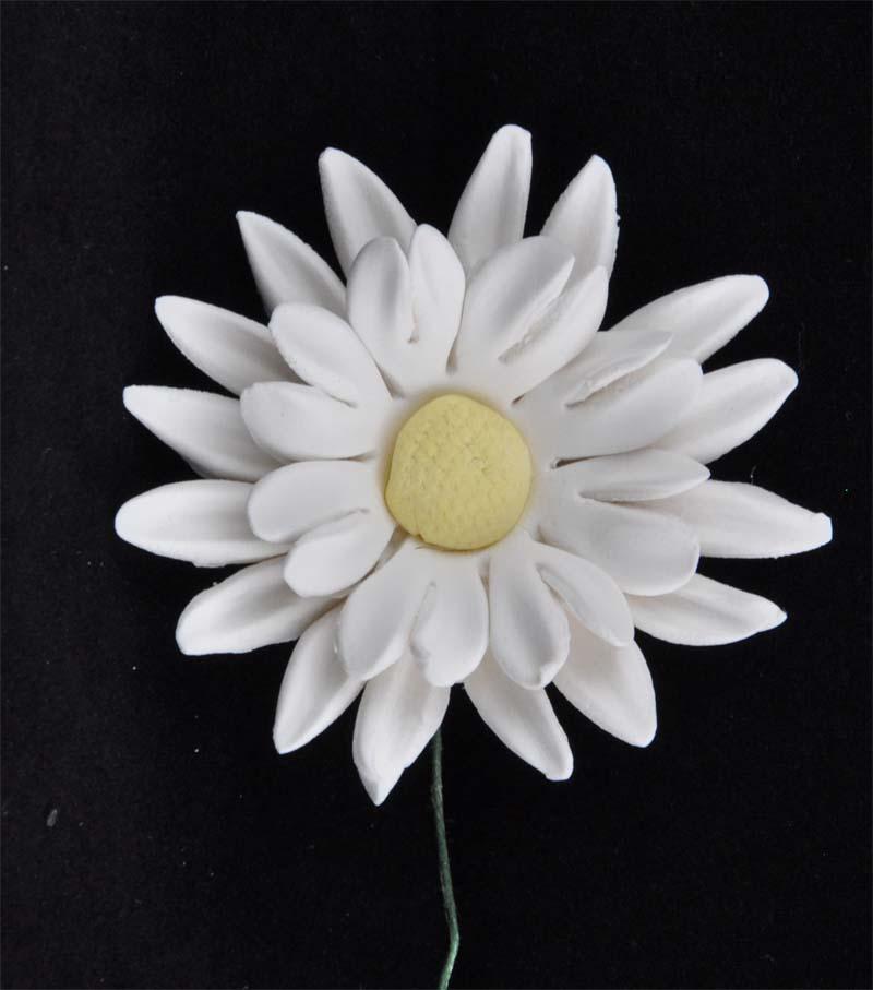 Large double daisy white 5.5cm