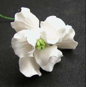 Single small Iris white 5cm